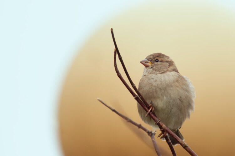 fotografia de passarinho num galho