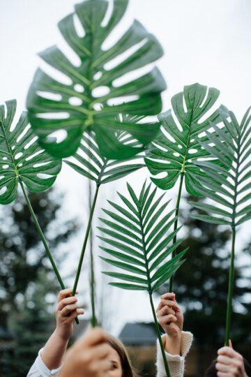 fotografia de palmas