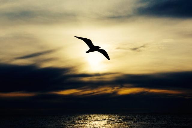 imagem em silhueta de ave a voar sobre o mar ao por do sol