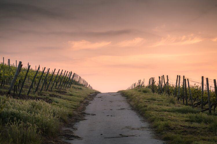 imagem de caminho com por do sol