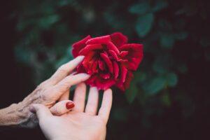 imagem de duas mãos de uma avó e neta a segurar uma rosa vermelha